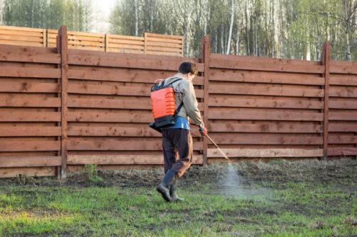 man sprays grass with herbicide of knapsack sprayer