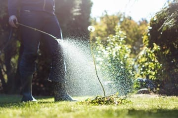 Exterminator spraying lawn spray