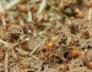pest control termite infestation plantation fl
