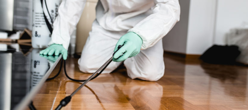 Exterminator spraying insecticide